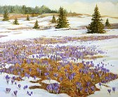 15339604-cold-weather-is-leaving-theme-a-meadow-with-blooming-spring-crocus-painted-on-the-canvas-by-me-kiril
